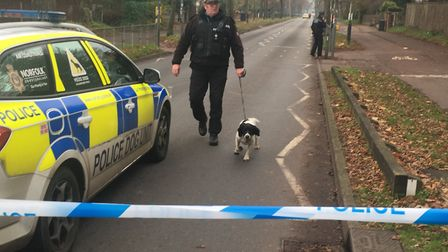 A police dog in Bluebell Road, Norwich. The road was closed following reports of a man acting suspic
