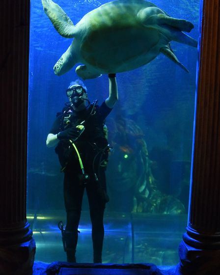 Noah, the green sea turtle, keeps an eye on the divers from the 23 Parachute Regiment as they clean