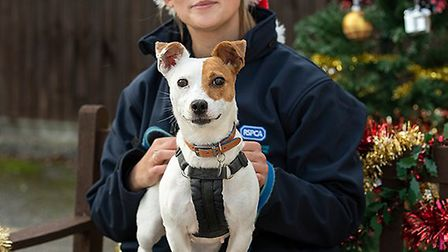 The RSPCA is bracing itself for the busiest day this Christmas period: 11 December. Picture: RSPCA