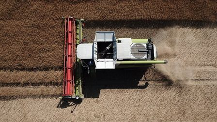 Oilseed rape being harvested in South Raynham. Picture: Patrick Joice