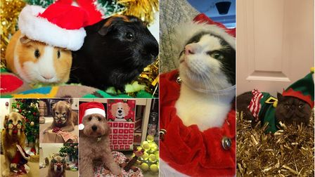 The finalists in the pets category of the Norwich Business Improvement District's Festive Faces cont