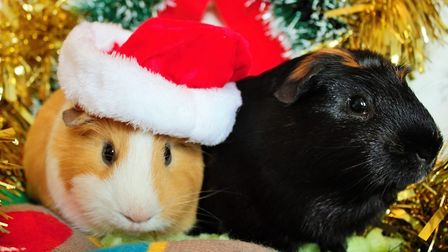 A finalist in the Norwich Business Improvement District's Festive Faces contest, taken by Nicole Nie
