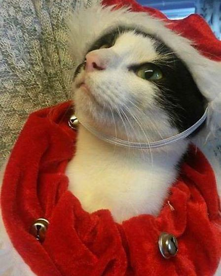 A finalist in the Norwich Business Improvement District's Festive Faces contest, taken by Sharon Wic