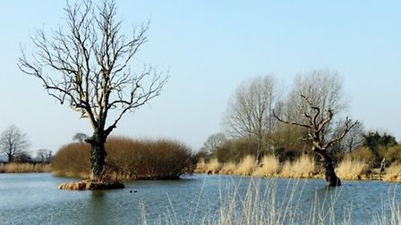 Willow Lakes in Bodham. Pictures: Environment Agency