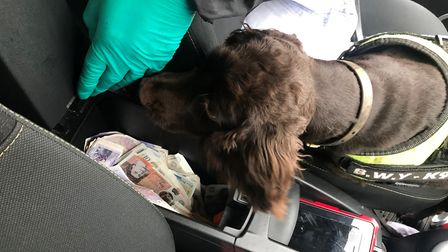 Sniffer dog YoYo finds thousands in cash in a car Picture: Norfolk Trading Standards