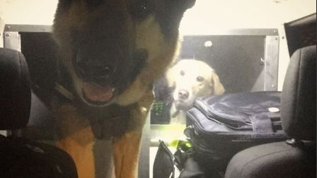 Police dogs Neeko and Toby chased four people in suspicious circumstances in Castle Rising on their