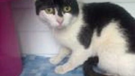 Welly is missing. Photo: Provided by RSPCA East Norfolk