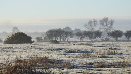 A frosty scene at RSPB Minsmere Picture: CHARLES CUTHBERT