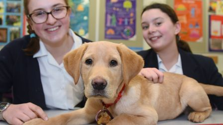 Casper the 16-week-old puppy who has just started at the Norwich High School for Girls as the school