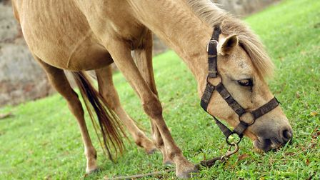 The fire service was called to free a horse stuck in a stable. Photo: Getty/Stock