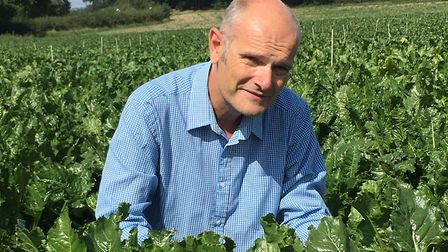 Dr Mark Stevens of the British Beet Research Organisation in a sugar beet field. Picture: BBRO