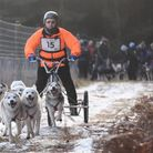 Excited Siberian Huskies race through Thetford Forest at the event organised by the British Siberian