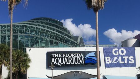 The Florida Aquarium is among the tourist attractions in Tampa Picture: David Freezer