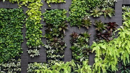 A living wall looks great and is also good for your health Picture: Getty Images/iStockphoto