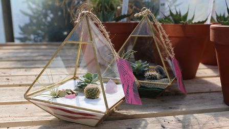 Cacti can be displayed in a number of ways, from a group of pots to an extravagant terrarium displa