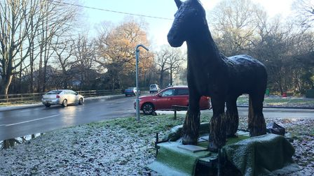 'War Horse' that had been spotted around Norfolk. Picture: ANDREW STONE