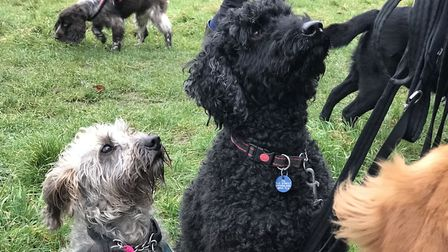 Dog walkers are on the look-out for poisonous food. Picture: Ella Wilkinson