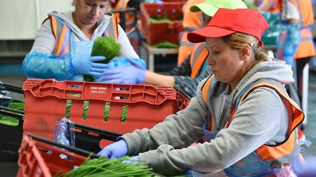 Concerns have been raised over the availability of seasonal harvest workers after Brexit. Picture: S