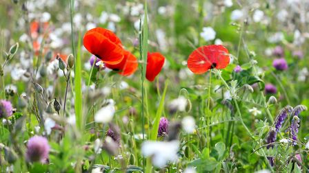 The Countryside Stewardship scheme pays farmers for work to improve wildlife and biodiversity on the