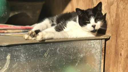 Enjoying a sunny spot at the PACT animal sanctuary near Hingham. Picture: Neil Didsbury
