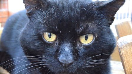 The RSPCA East Norfolk are hoping to rehome Braveheart. Photo: RSPCA East Norfolk