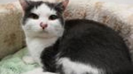 The RSPCA East Norfolk are hoping to rehome Clementine. Photo: RSPCA East Norfolk