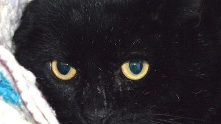 The RSPCA East Norfolk are hoping to rehome Crackers. Photo: RSPCA East Norfolk
