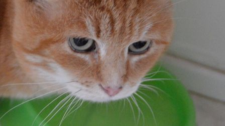 The RSPCA East Norfolk are hoping to rehome Carrot Cake. Photo: RSPCA East Norfolk
