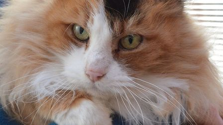 The RSPCA East Norfolk are hoping to rehome Marigold. Photo: RSPCA East Norfolk