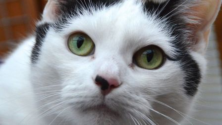 The RSPCA East Norfolk are hoping to rehome Lacey. Photo: RSPCA East Norfolk