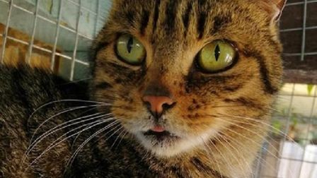 The RSPCA East Norfolk are hoping to rehome Solitaire. Photo: RSPCA East Norfolk