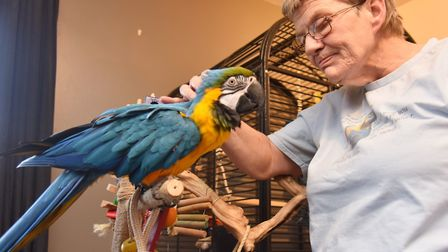 Sue Baggott faces eviction from her Diss home if she doesn't rehome her parrots.Byline: Sonya Duncan