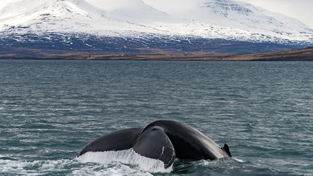 Whale watching will now be available to Norwich Airport passengers. Picture: Super Break