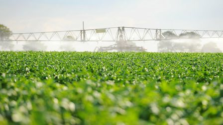 Irrigation licences are under threat in the Ant Valley. Picture: James Bass
