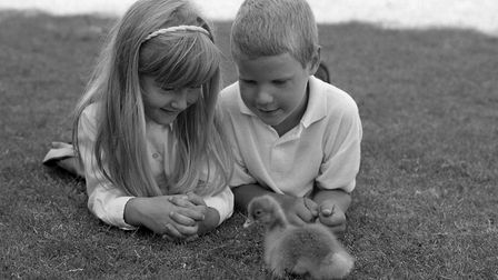 Children from Acle Primary School with a gosling, July 1990. Photo: Archant Library