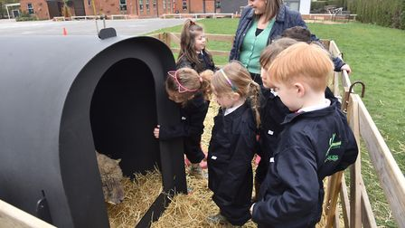 Spahawk Infant and Junior School children get to look after a ewe and her lamb for a week as part of