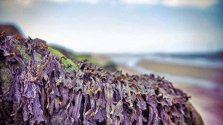 Seaweed in Sea Palling. Picture: Colin Inglis