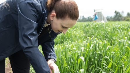 Dr Diane Saunders of the John Innes Centre in a wheat field. Picture: John Innes Centre