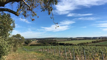 The vineyard at Burn Valley Picture: Submitted