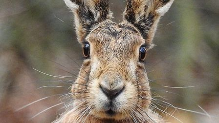 The stunning image of a hare taken by Thetford amateur wildlife photographer James Cutts that has pr