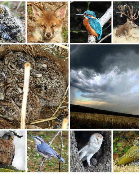Some of the images taken by local amateur photographer James Cutts of wildlife in the countryside ar