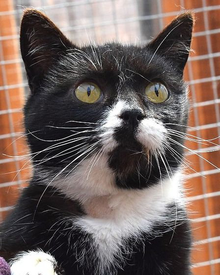 Sub (pictured) and Symphony are looking for a home. Photo: RSPCA East Norfolk