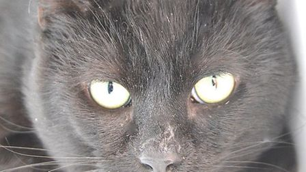 Howard is looking for a home. Photo: RSPCA East Norfolk