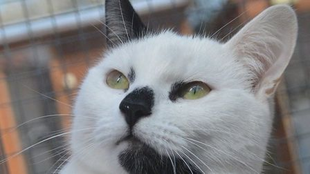 Scotch is looking for a home. Photo: RSPCA East Norfolk