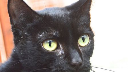 Belle is looking for a home. Photo: RSPCA East Norfolk