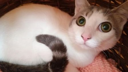 Benidorm is looking for a home. Photo: RSPCA East Norfolk
