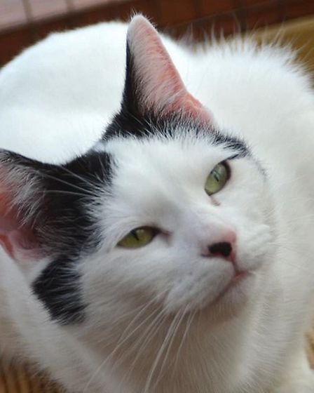 Lacey is looking for a home. Photo: RSPCA East Norfolk
