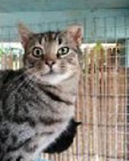 Norman is looking for a home. Photo: RSPCA East Norfolk