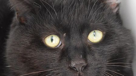 George is looking for a home. Photo: RSPCA East Norfolk