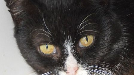 Sub needs a new home. Photo: RSPCA East Norfolk